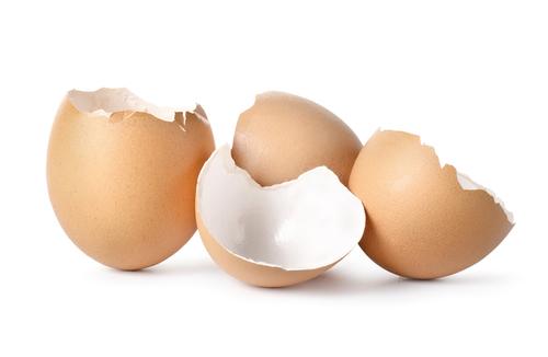 カタツムリ卵殻