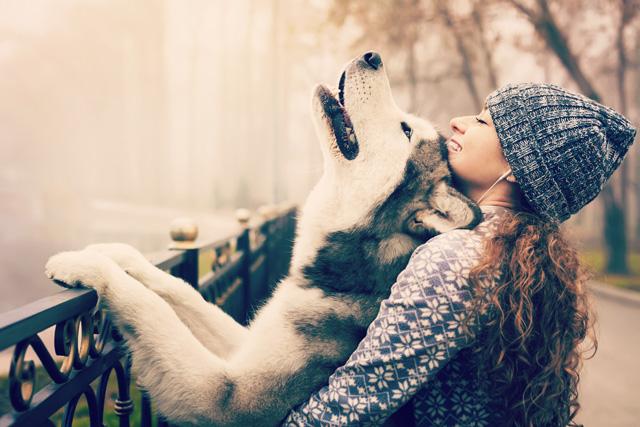 あるある! 犬の飼い主なら絶対共感できること6つ